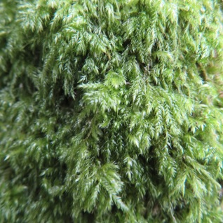 Close up of the moss