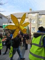 A giant daffodil