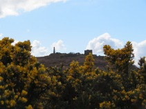Carn Brea and Gorse
