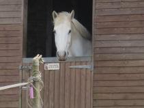 A horse called Zeita