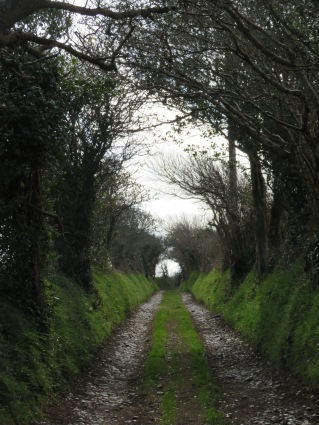 Up the lane