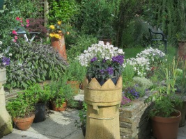 Heliotrope and Vanilla Nemesia at the bottom of the steps leading up to the garden
