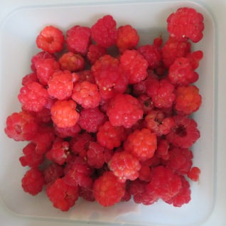 Homegrown raspberries