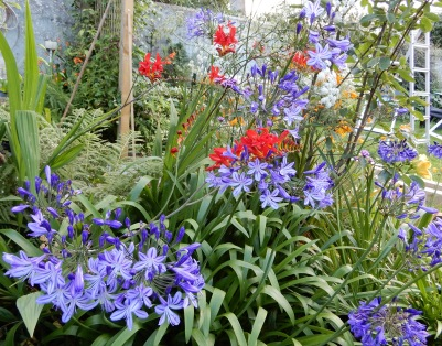 Agapanthus and Crocosmia and in the background, the beginnings of the repaired arch